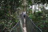 poring-treetop-canopy