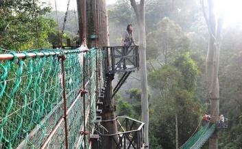 sabah-danum-canopy-walkway-01